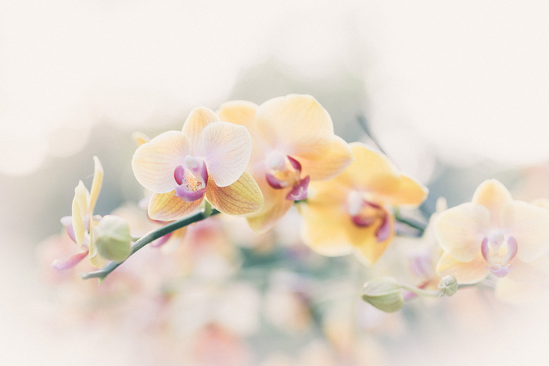 Orchids in Vietnam by DOMINIK PHOTOGRAPHY